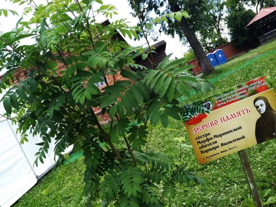 Дерево памяти келейницы Варвары