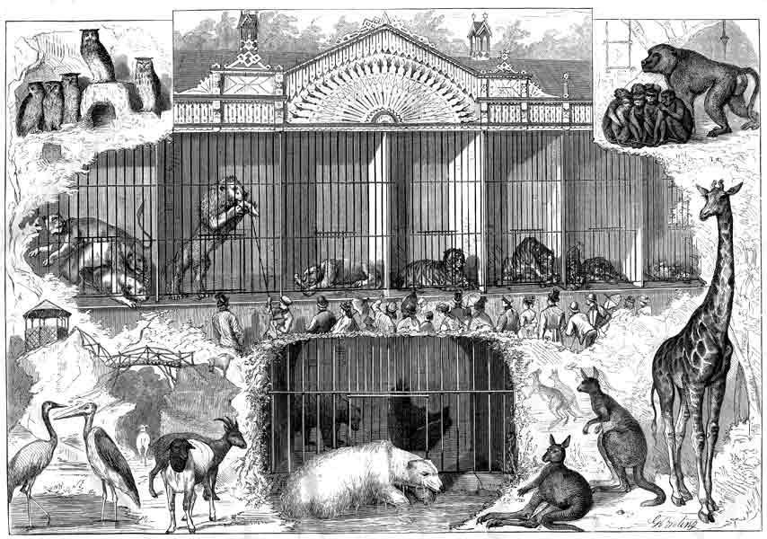 Гравюра -зоосад 1870-е