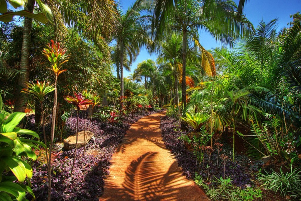 Русские на плантациях (Гавайи)