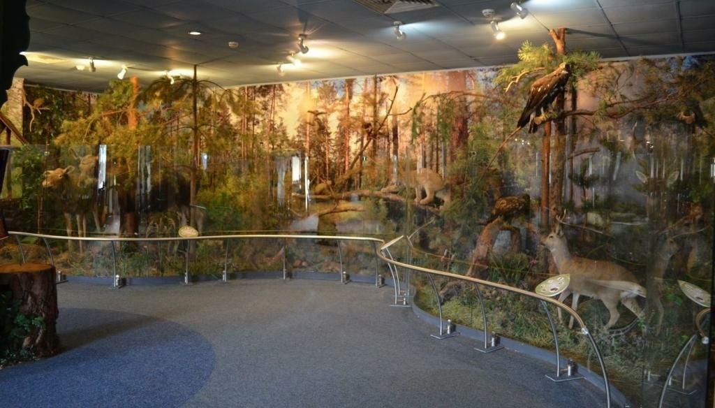 Музей природы во Владимире