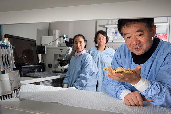 Студент доктора философии Yizheng Ву, Невролог Dr Yinghua Yu. и профессора Xu-Feng Huang с  (с корнем женьшеня )