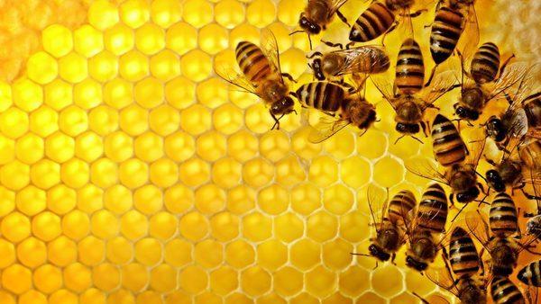 Шестиугольные пчелиные соты