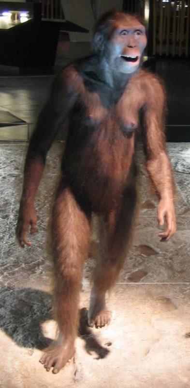 Реконструкция самки Australopithecus afarensis