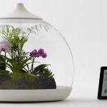 террариум для растений купить