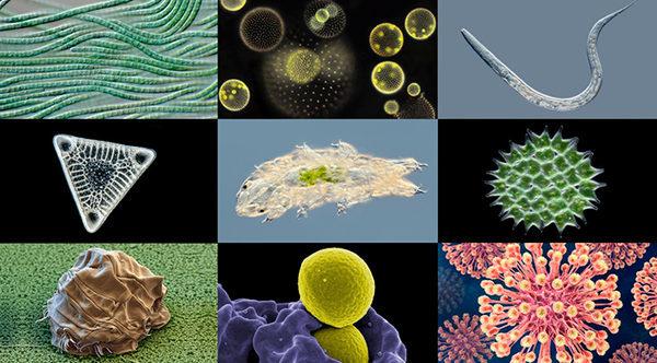 микробиология от А до Я Micropia