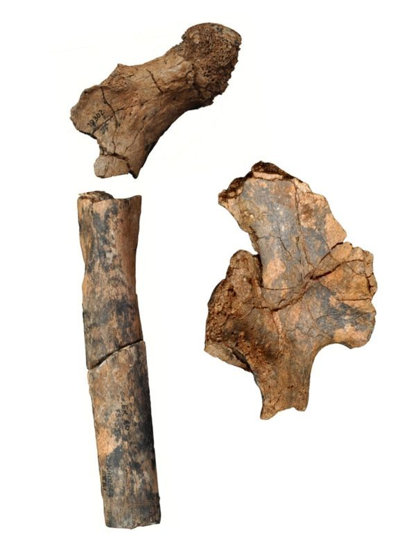 кости древних людей