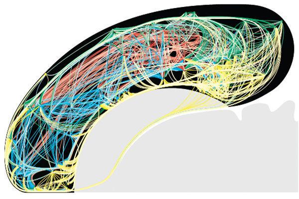 Нейронные связи головного мозга