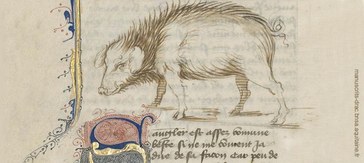 yyzUgalde manuscrit-sanglier.jpg
