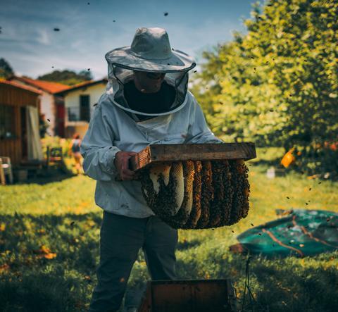 Loreztia à Bayonne: des fleurs pour les abeilles