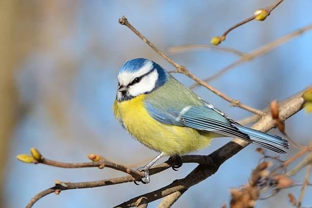 Les-oiseaux-d-Arnaga_vignette_mp.jpg