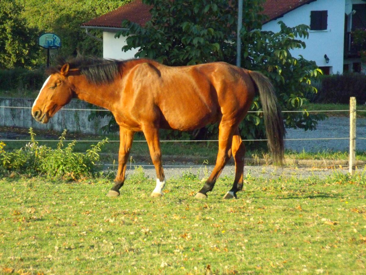 Le cheval des vacances