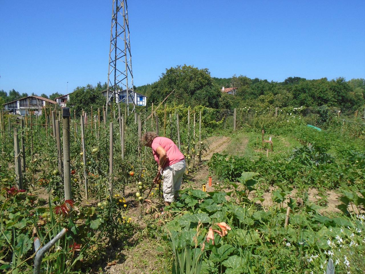 Le potager de Véronique - jardins partagés