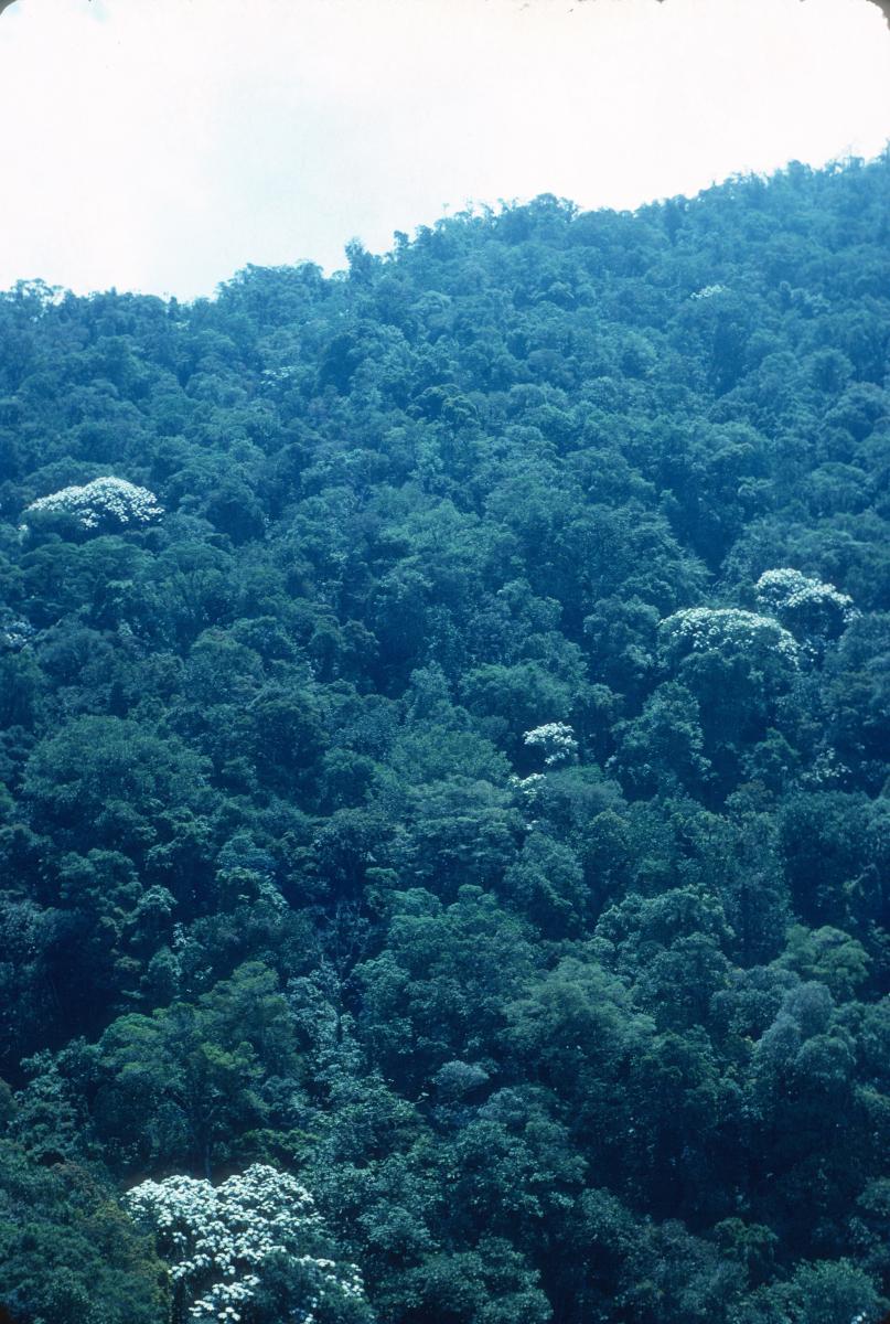 Venezuela,survol en téléphérique de la forêt primitive, région de Mérida dans les Andes.jpg