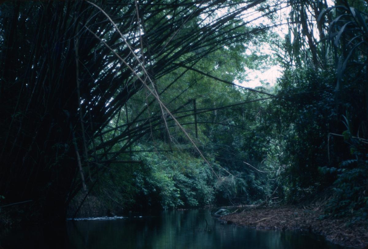 Venezuela, petit ruisseau tranquille  en apparence pourtant infesté de piranhas, mais je ne le savais pas!.jpg