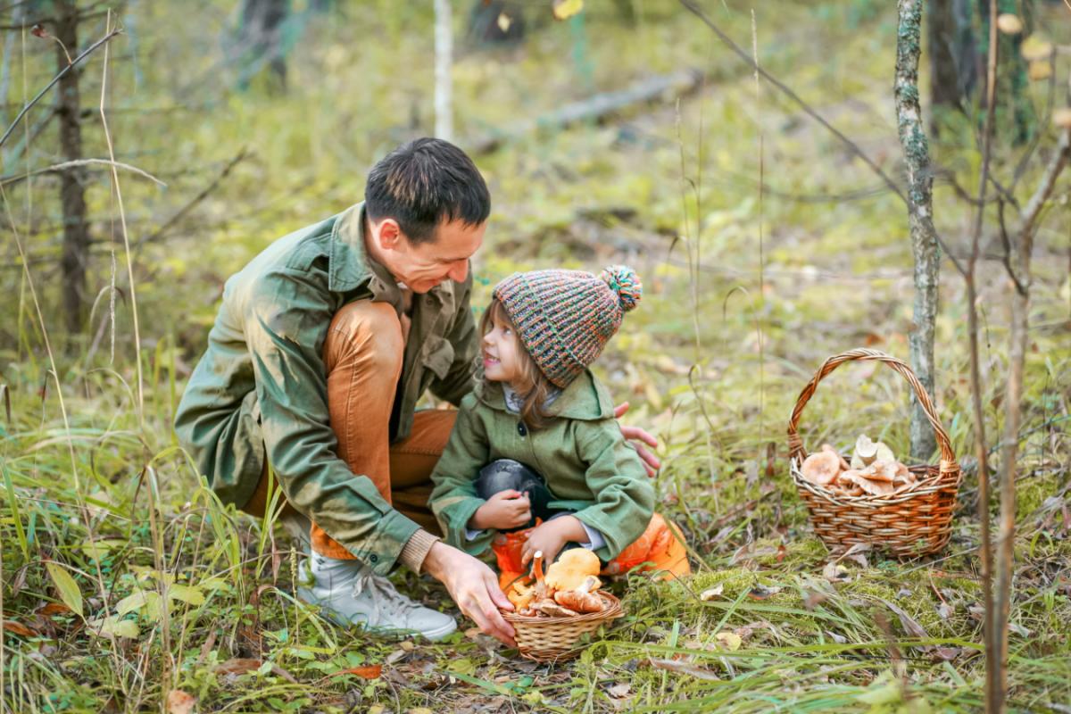 Cueillette des champignons : 16 recommandations pour éviter les intoxications