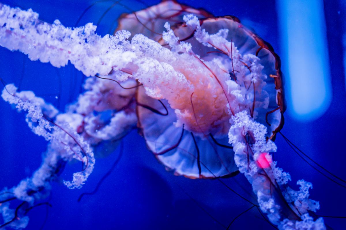 Quels sont les bons réflexes en cas de brûlure de méduse ?