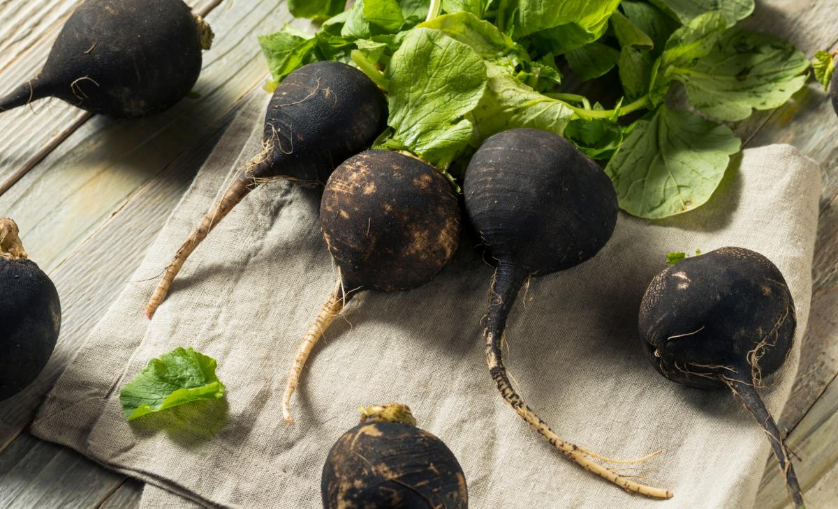 Détox, les bienfaits du radis noir