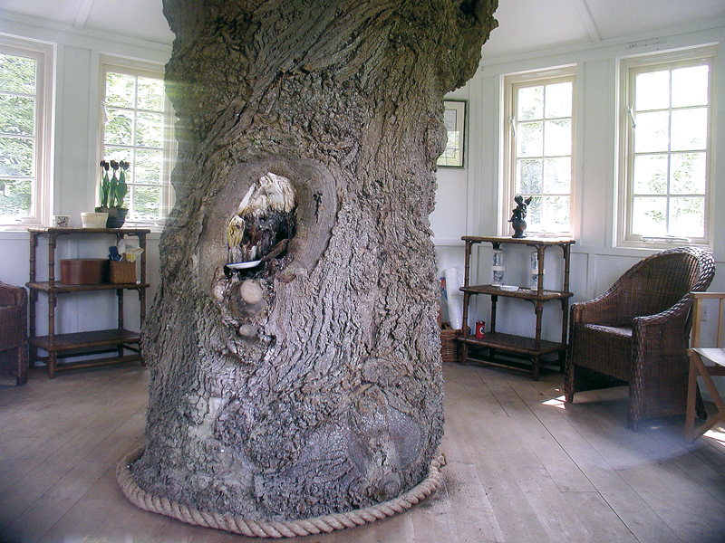 A casa sull 39 albero con la liana casa naturale for Tronco albero arredamento