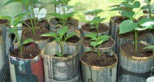 Vasi biodegradabili realizzati in carta di giornale