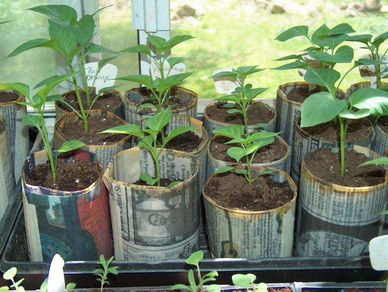 Come creare dei vasi biodegradabili casa naturale for Vasi per semina