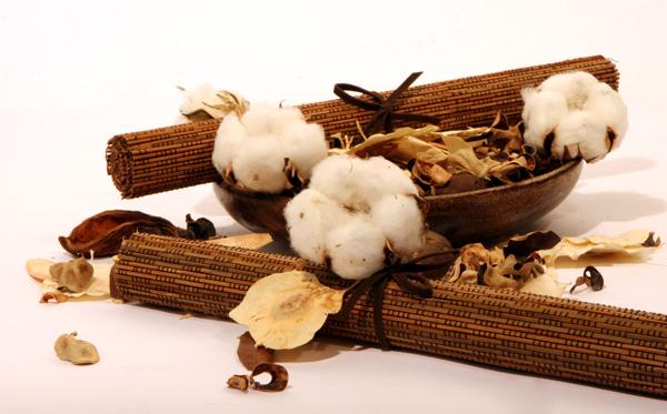 Il cotone organico