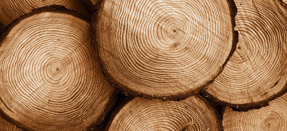 Perché il legno è green