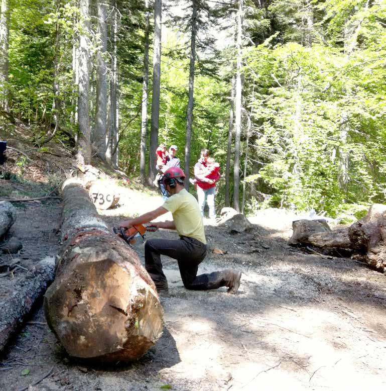 Scegliere il legno della tua casa casa naturale - Aerazione naturale della casa ...