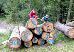 Scegliere il legno