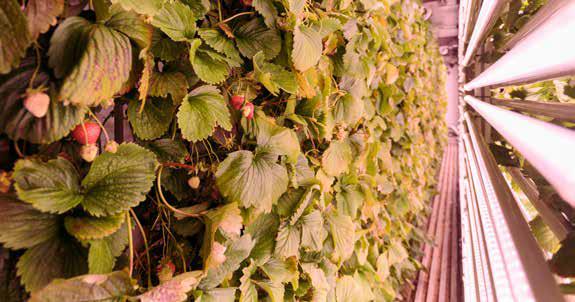 frutta e verdura | sistema cooltainer
