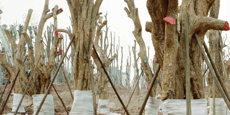 alberi | progetto Forest di Yan Preston