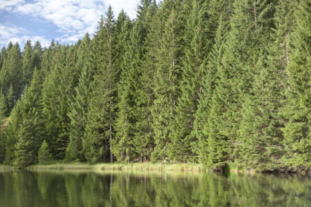 boschi | legno Holzius