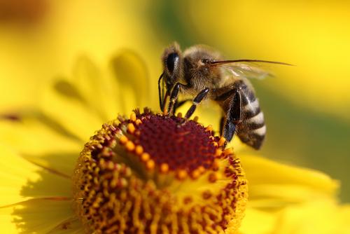 api e pesticidi