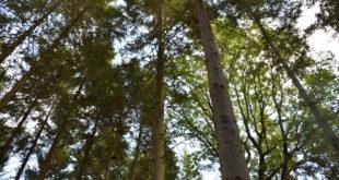 Trace: sistema per monitorare la salute degli alberi | foresta parlante