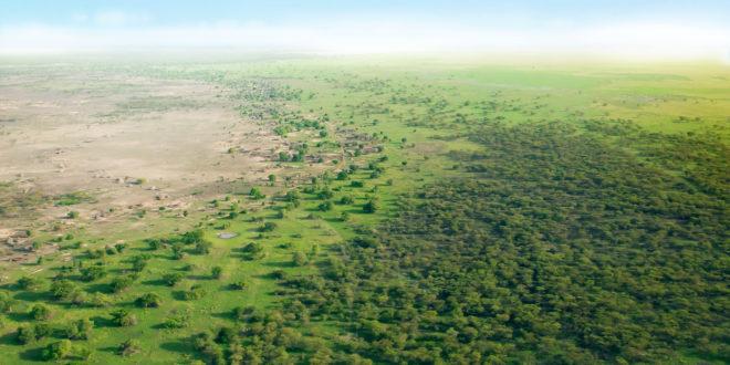 Great Green Wall: muro verde per combattere il cambiamento climatico