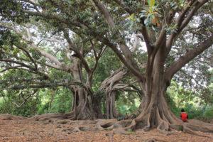 turismo arboreo | scoprire la natura