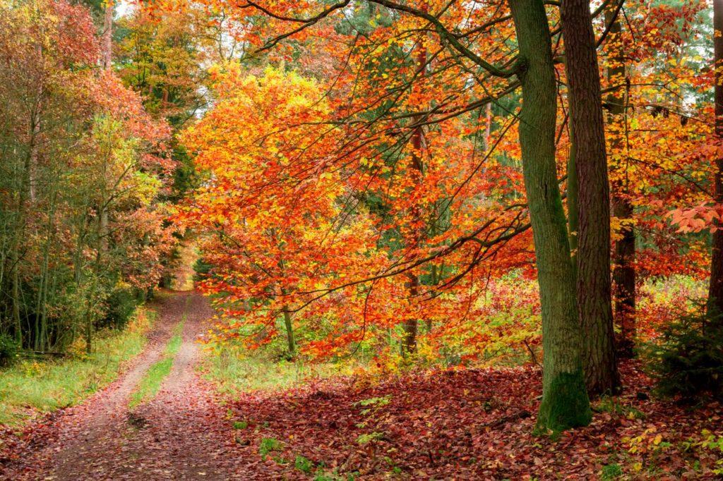 Turismo arboreo: passeggiare nel verde | paesaggio autunnale