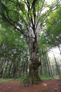 turismo arboreo | passeggiare nella natura