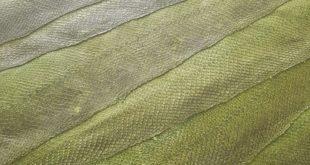 pelle sostenibile | pelle di mare | etica incontra il design