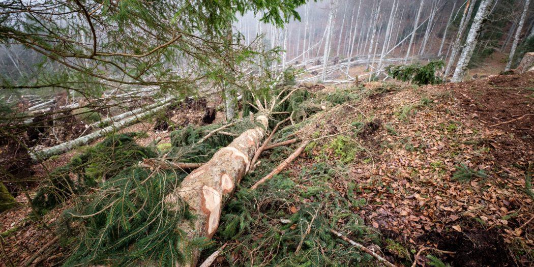 foresta abbattuta | valore al legno