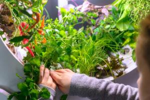 ogarden | giardino in casa | orto in casa| domotica | innovazione | coltivare