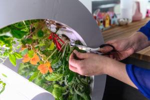 ogarden | giardino in casa | orto in casa| domotica | innovazione | coltivazione