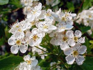 orticola   mostra   evento florovivaistico   orto   piante   fiori   fuoriorticola
