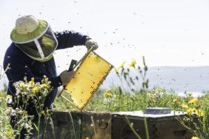 apicoltore al lavoro | api | giornata mondiale delle api e dell'apicoltura