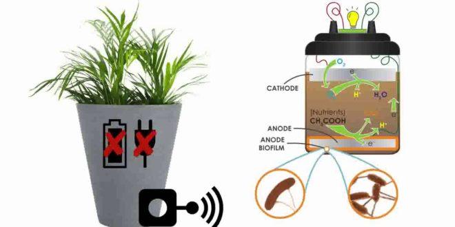 Wiseair, vasi intelligenti per mappare lo smog