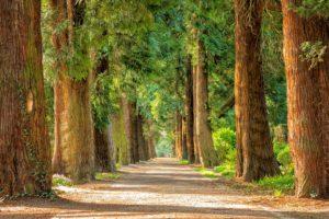 ragazza legge libro nella natura | biblioteca nel bosco | alberi | sostenibilità