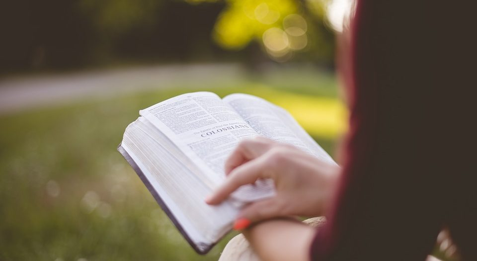 ragazza legge libro nella natura | biblioteca nel bosco | alberi