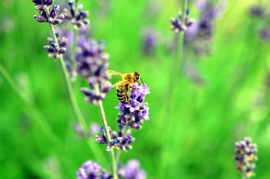 corridoio per api a Londra