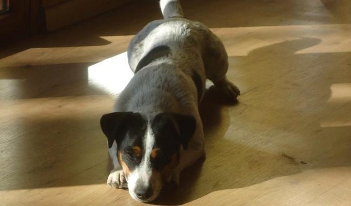 serilizzazione cani