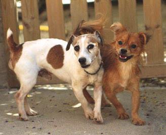 Jack e Pechi, in adozione a Oristano