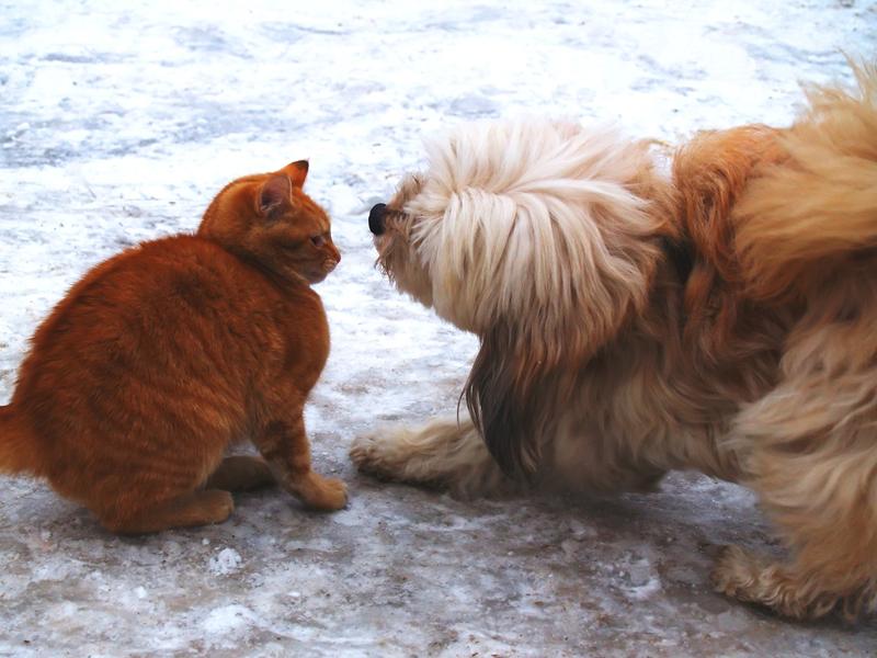 Convivenza cani e gatti